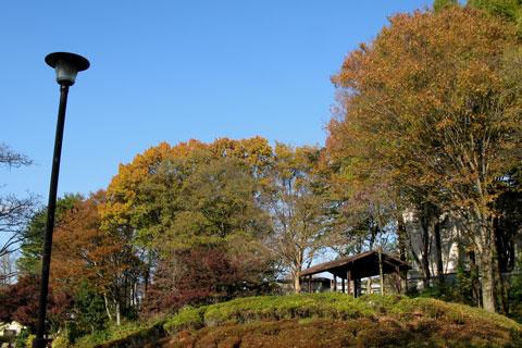 Autumn-05.jpg