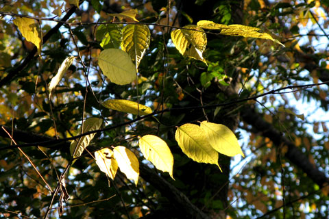 Autumn-07.jpg