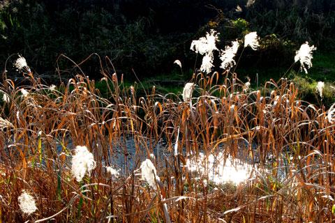 Autumn-08.jpg