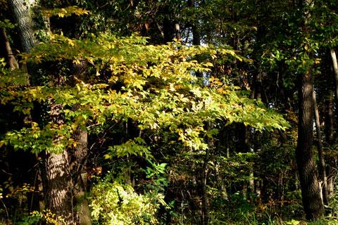 Autumn-17.jpg