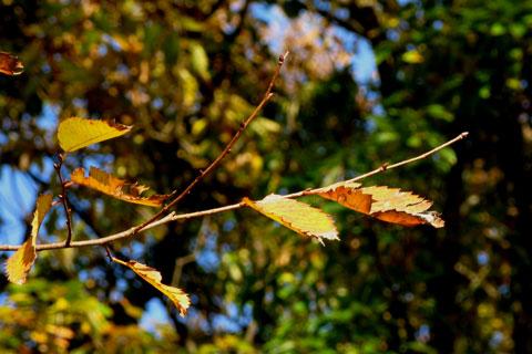 Autumn-21.jpg