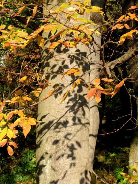 Autumn-22.jpg