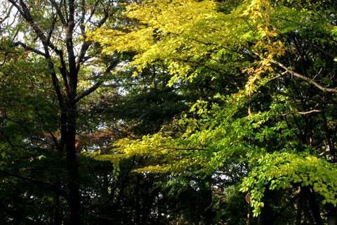 Autumn-24.jpg
