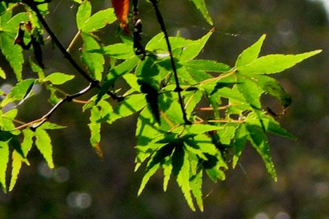 Autumn-32.jpg