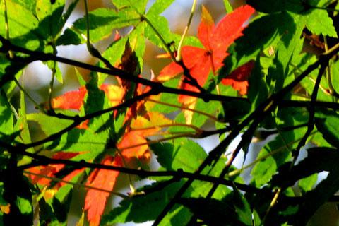 Autumn-33.jpg