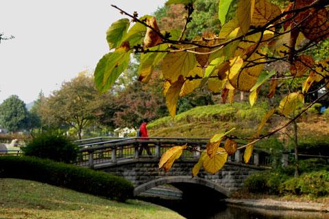 Autumn-34.jpg