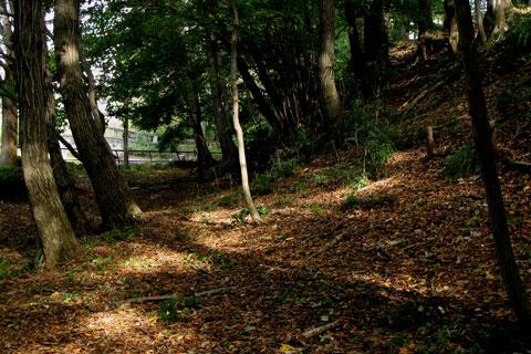 Autumn-41.jpg