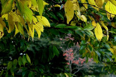 Autumn-45.jpg
