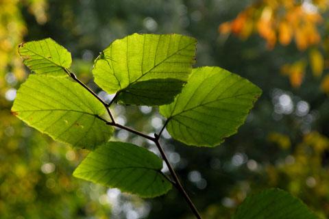 Autumn-53.jpg