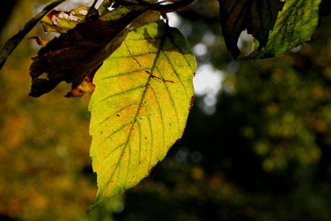 Autumn-54.jpg