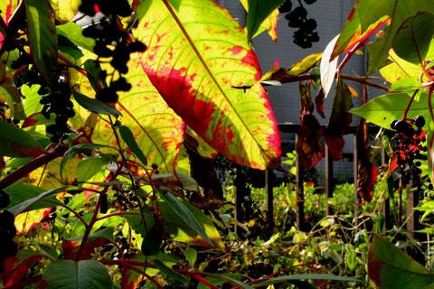 Autumn-55.jpg