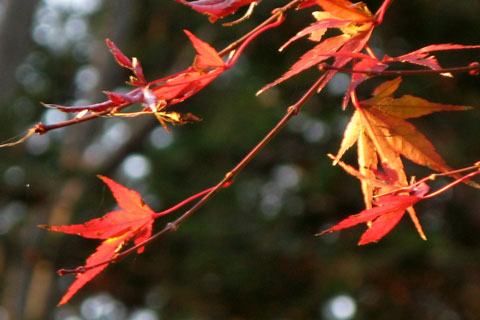 Autumn-Leaves-01.jpg