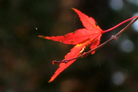 Autumn-Leaves-02.jpg