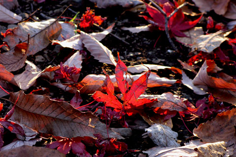 Autumn-Leaves-03.jpg