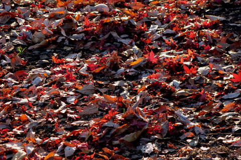 Autumn-Leaves-05.jpg