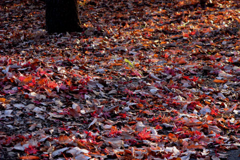 Autumn-Leaves-06.jpg