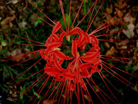 Flower-01.jpg
