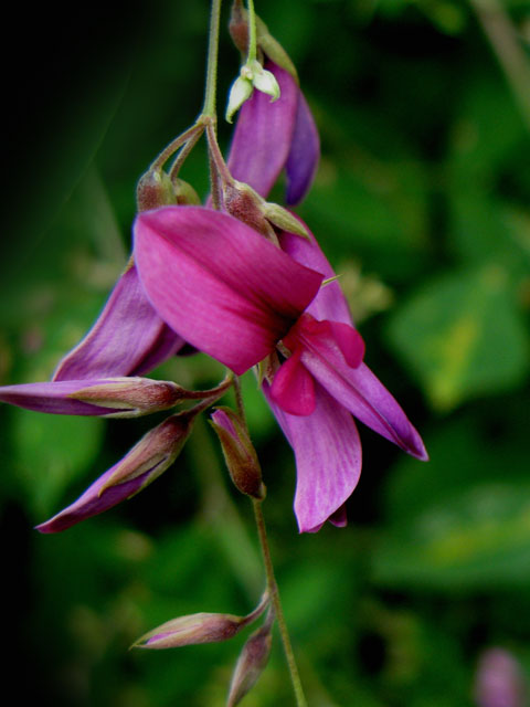 Flower-05.jpg