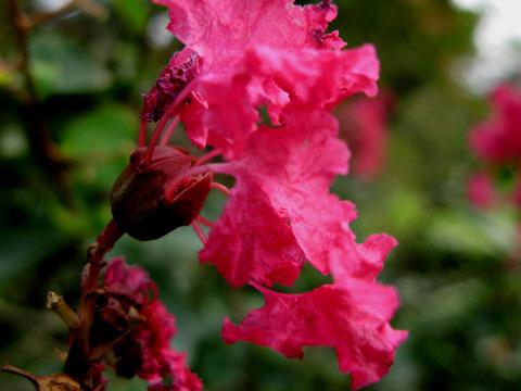 Flower-06.jpg