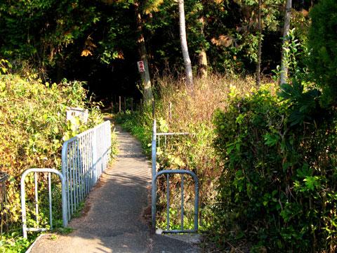 Sagimori-03.jpg