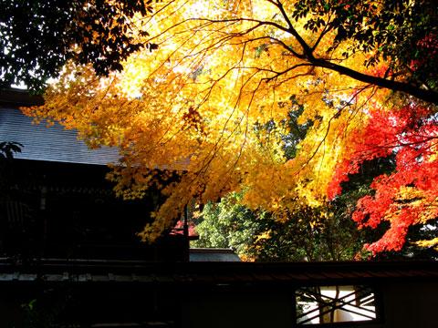 Sagimori-11.jpg